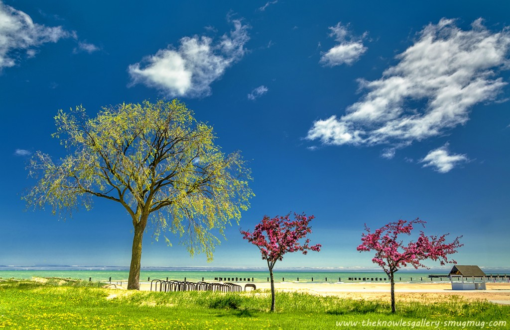 https://www.flickr.com/photos/theknowlesgallery/  Spring trees and beach on Lake Michigan  Beach side trees and blue sky on the shores of Lake Michigan. Hard to believe that the sky scrapers of the city of Chicago is 1 block behind me.