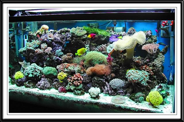 colorfulSaltwaterAquarium