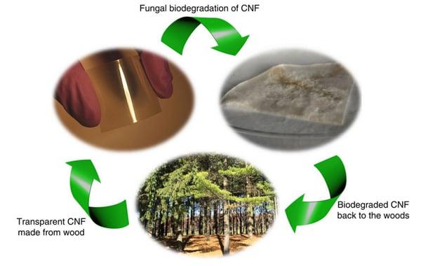 cellulose-nanofibril-wood-microchip-2