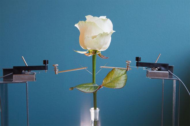 electronic-plant-cyborg-linkoping-2