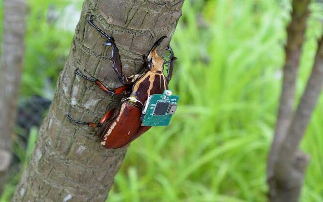remote-controlled-beetle-2