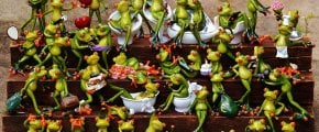 frogs-1371297_640